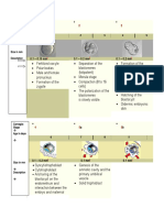 Anatomy Embryo Development Stages - Diagramatic Timeline 3 Proper