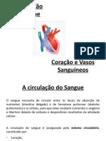 Coração e Vasos Sanguíneos