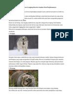 10 Contoh Hewan Carnivora Lengkap Dengan Gambar Beserta Penjelasannya