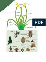 Dados de plantas