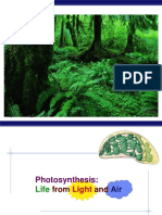 16 Photosynthesis 2009