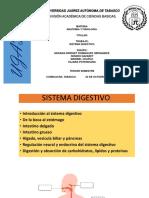 DIGESTIVO..pptx