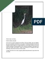 Zoologia Aves Fotos