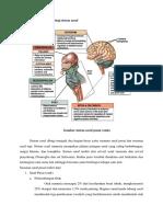Anatomi Dan Fisiologi Sistem Saraf Jen
