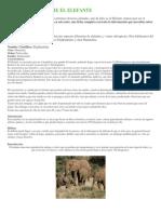 Informacion Sobre El Elefante