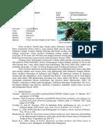 Resume Materi Pinus Merkusii