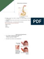 Patología Del Estomago0