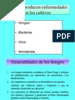 clasehongos2010