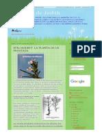 Epilobiium p La Planta de La Prostata.html