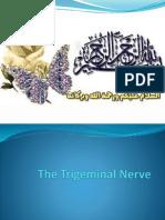 CNS Trigeminal Nerve(v)