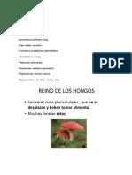 Características del Reino Fungi.docx