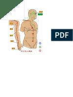 3 Visceral Cavities M 三焦经  10b.docx