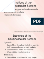 Cardiovascular System (1)