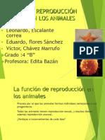 10 Reproduccion Animales