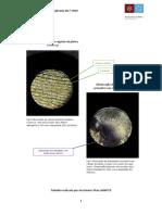 «Relatório» sobra as observações feitas a células vegetais da Elodea sp. e de amiloplastos da batata