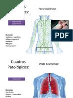 Cuadros Patológicos