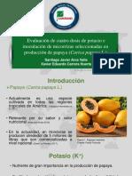 Evaluación de cuatro dosis de potasio e inoculación de micorrizas seleccionadas en  producción de papaya ( Carica papaya L.