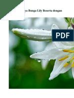 Cara Budidaya Bunga Lily Beserta Dengan Gambarnya