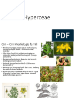 Hyperceae