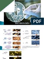 Bacterias y Clasificacion