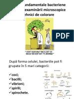 LP 2 Microbi Colorații