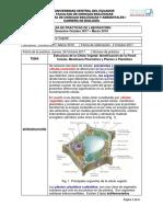 Práctica1-CélulaVegetalOrganelos_Par1