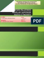 HUESOS PALATINOS