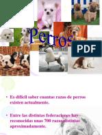 Perritosss.ppt