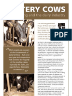 Zero Grazing and the Dairy Industry