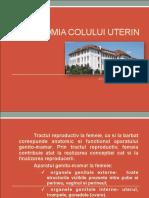 Anatomia Colului Uterin