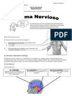 Guía Sistema Nervioso