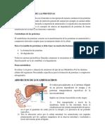 ABSORCION-DE-LOS-AMINOACIDOS.docx