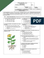 Evaluación de síntesis, ciencias Naturales 3° básico