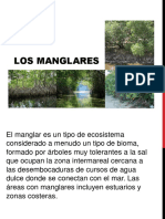 Ecosistema de manglares