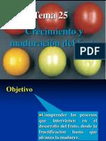El_fruto_1