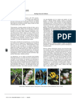 15Leguminosas.pdf