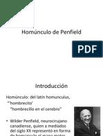 Homúnculo de Penfield