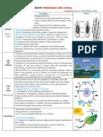 Unidad IV. Metabolismo Del Carbono