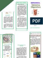 Sistema Digestivo Triptico