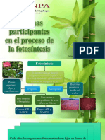 Enzimas de La Fotosíntesis