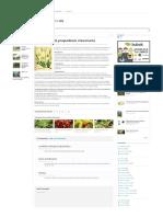 Licopodio – (Lycopodium clavatum) - www.plantasyjardines.es.pdf