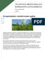 Galio.propiedades Medicinales, Plantas Medicinales