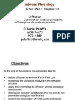 4 Diffusion Peluffo2010