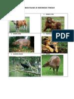Gambar Fauna Di Indonesia Tengah