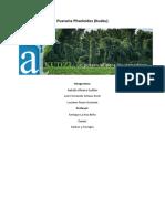PUERARIA-PHSELOIDES-KUDZU.docx