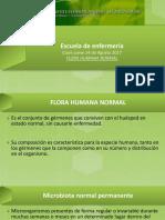 Flora Bacteriana Del Ser Humano
