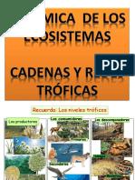 Dinámica de Los Ecosistemas - Cadenas y Redes Tróficas (1)
