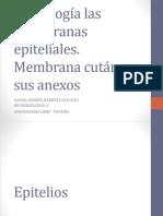 Morfología de La Piel y Anexos