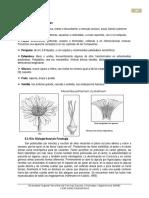 Aizoaceae (1)