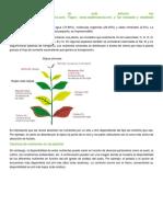 Carencia de Nutrientes en Las Plantas